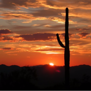 Cactus Sunset - Foundation For Senior Living